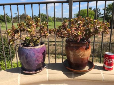 Greenbaum's Moving Estate Sale In Encinitas Ranch, Encinitas