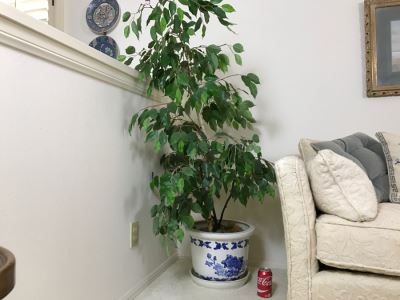 Artificial Plant With Blue And White Pot