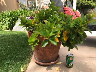Large Potted Outdoor Plant