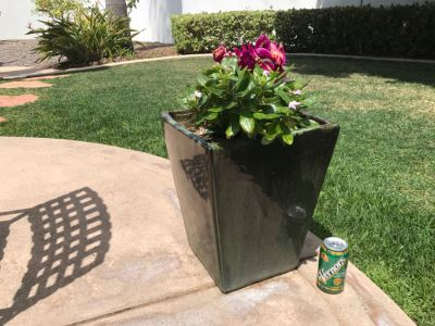 Large Outdoor Potted Plant