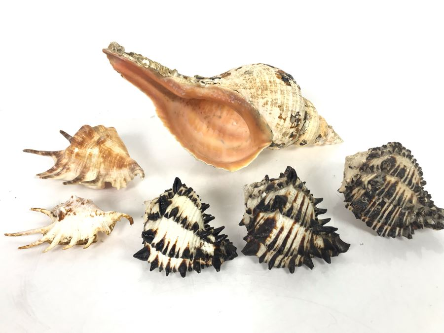 JUST ADDED - Organic Exotic Seashell Collection [Photo 1]