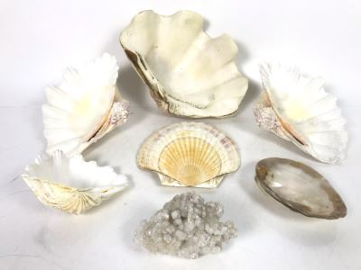 JUST ADDED - Organic Exotic Seashell Collection