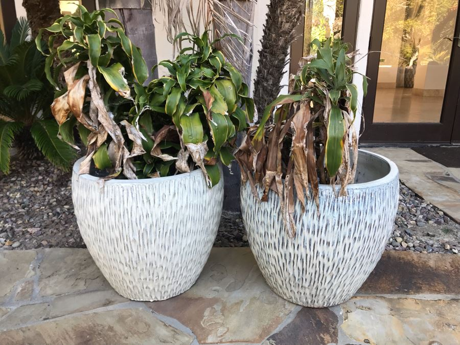 Pair Of Large White Glazed Modern Ceramic Planters With Plants 20'H X 21'W